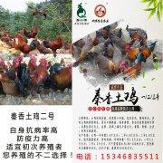 甘肃秦安安先生订购的香三贝博棋牌app官网下载鸡